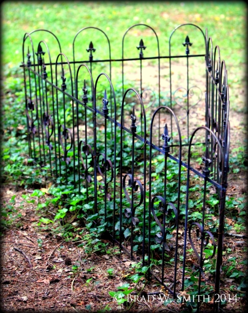 Wrought iron fence in a small triangle, English Ivy and other ground cover. Nothing inside the fence.