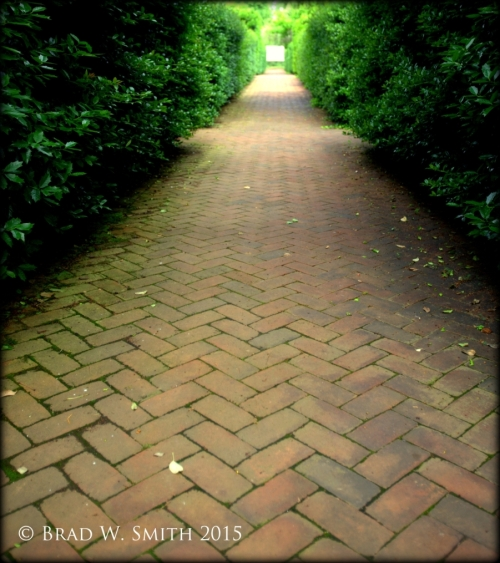 herringbone red brick path lined with tall hedge; small square of open spacefar distant end of path