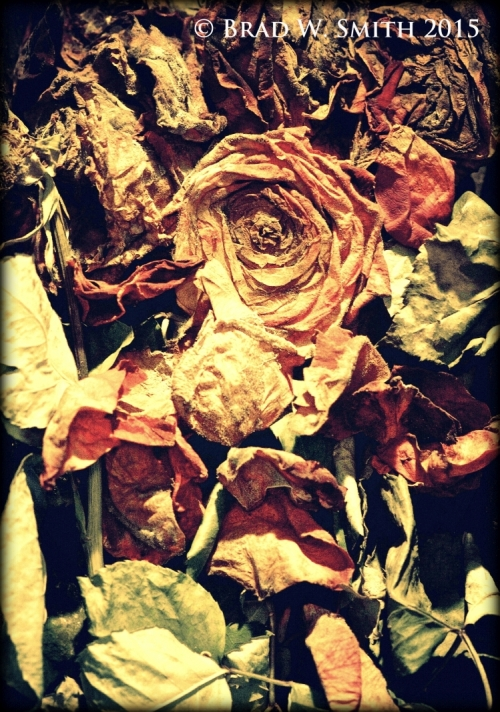 top-down look at a crowded bouquet of faded roses